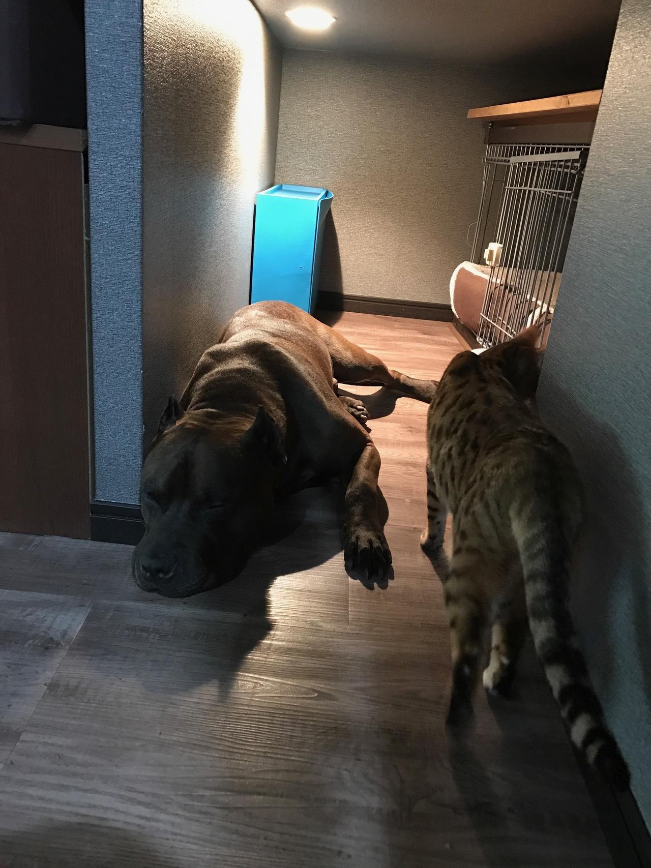 犬猫の銅線